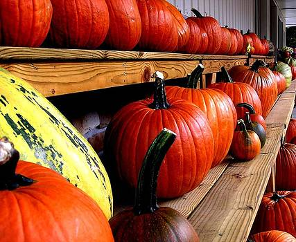 Pumpkin Lineup by Julie Grandfield