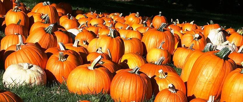 Pumpkin Patch by Beth Andersen