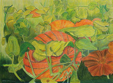 Pumpkin Patch by David Cardwell