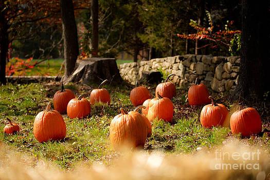 Pumpkin Patch by Sharon Cuartero