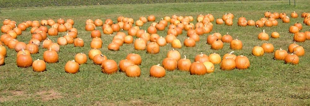Pumpkins by Lee Hartsell