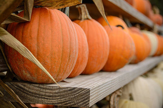 Pumpkins on a Shelf by At Lands End Photography