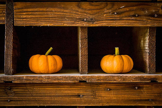 Pumpkins on Display by Dawn Romine