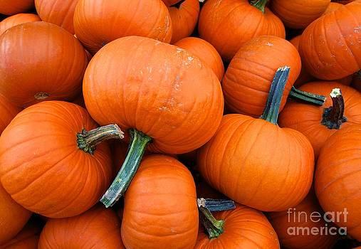 Pumpkins  by Sarah Mullin