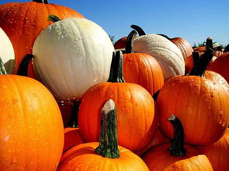 Pumpkins by Thomas Taylor