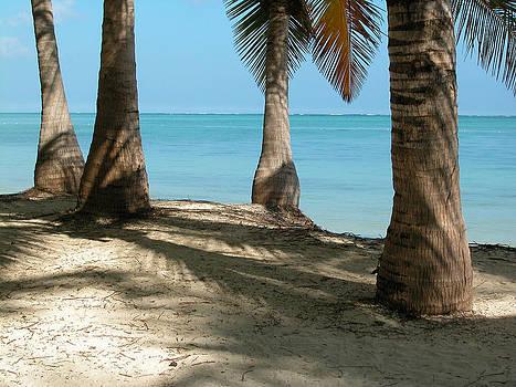Punta Cana Palm Trees by Rob Huntley
