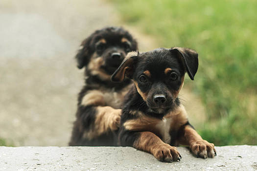 Puppies by Sorin Iana