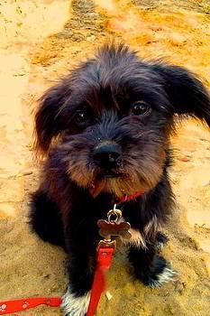 Puppy and Sand by Natasha Lane