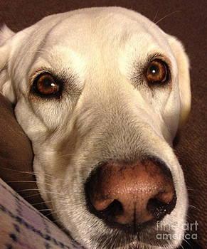 Tracey McQuain - Puppy Dog Eyes