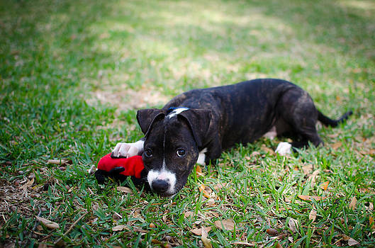 David Morefield - Puppy Eyes