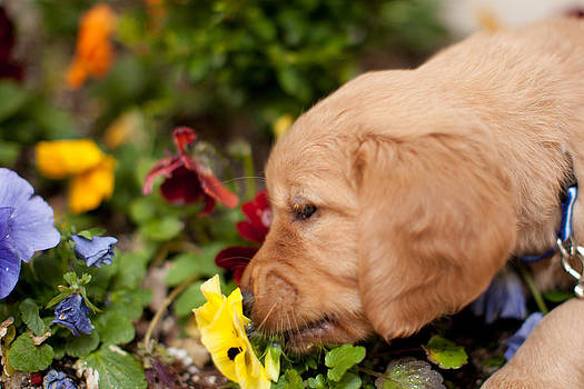 Puppy Flower by Jason Feldman