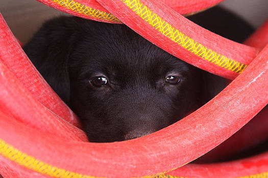 Puppy Hidden in Waterhose by Patricia Alexander
