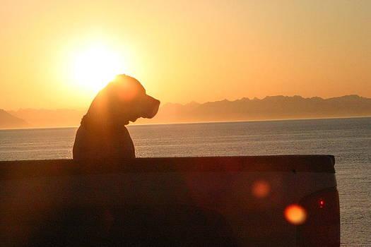 Puppy In the Alaskan Sun by Jesse Flaherty