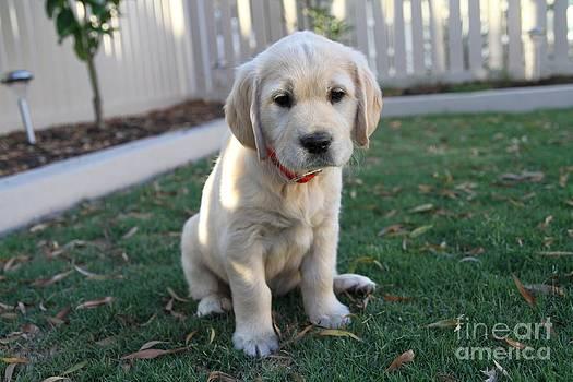 Puppy love by Crystal Beckmann