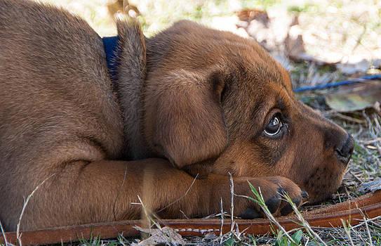 Marilyn Wilson - Puppy Love