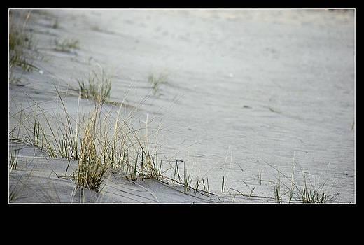 Rosemarie E Seppala - Pure And Simple Beauty Coastal Living On Lake Michigan Beach