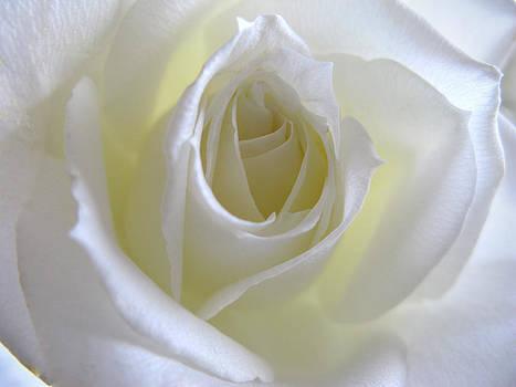 Pure Rose  by Etti PALITZ