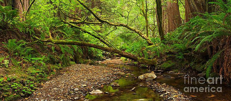 Purisima Creek by Matt Tilghman