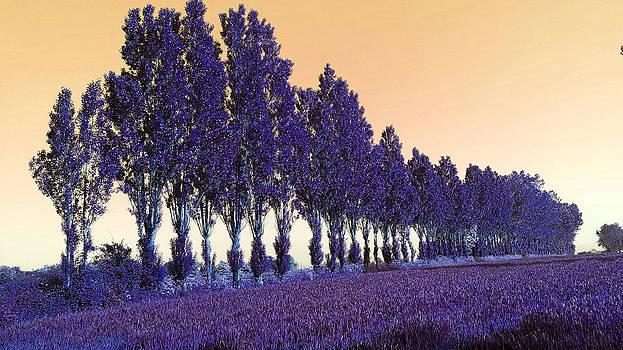 Purple Alley by Davina Nicholas