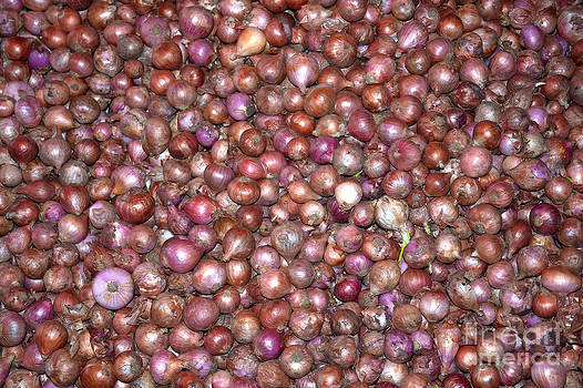 Purple and red onions by Christina Rahm