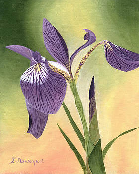 Purple and White Iris by Sara Davenport