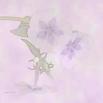 Sandra Foster - Purple And White Phlox - Digital Watercolor