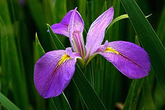 David Rich - Purple and Yellow Bloom