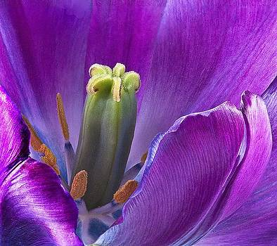 Jan Hagan - Purple Beauty