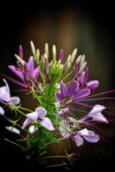 Purple Beauty by Kathy Williams-Walkup