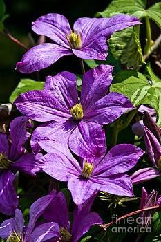 Purple Beauty Trio by Ms Judi