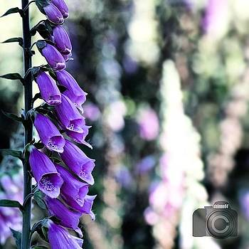 Purple Bells #flowersbydl by David Lopez