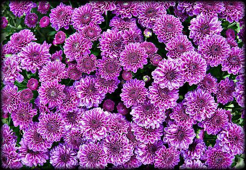 Ricky Barnard - Purple Blanket