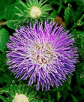 Matt Create - Purple Bloom