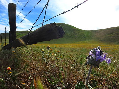 Purple Bloom by Paul Foutz