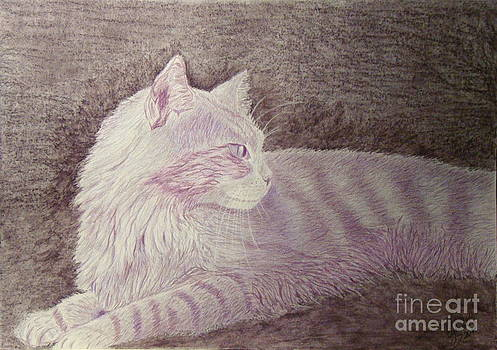 Purple cat by Cybele Chaves