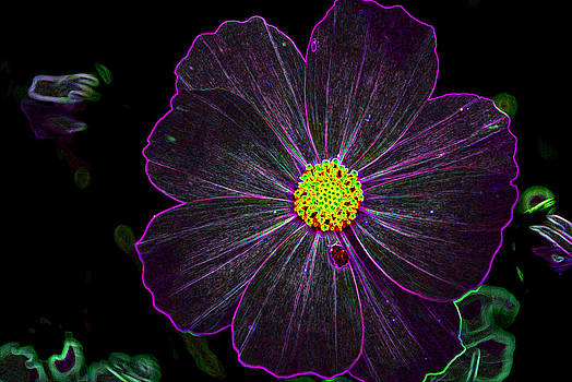 Purple Charisma by Vijinder Singh
