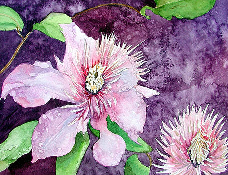 Purple Clematis by Marcy Silverstein