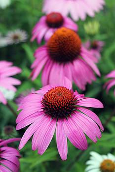 Bonnie Davidson - Purple Daisy