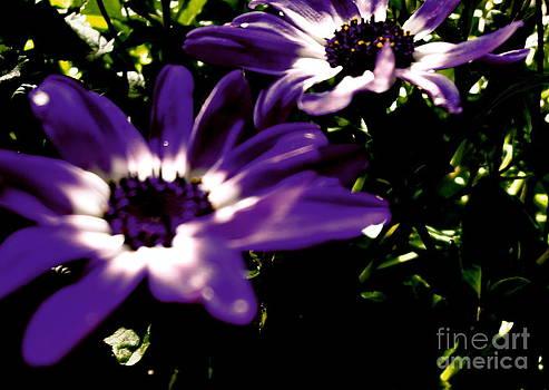 Purple Daze by Cathy Dee Janes