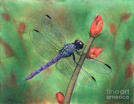 Purple Dragonfly by Christian Conner