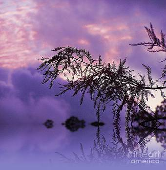 Purple Dream by Zsuzsa Lado