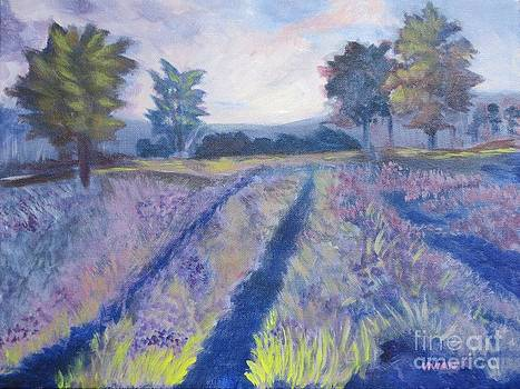 Purple Field by Vivian Haberfeld
