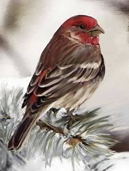 Shere Crossman - Purple Finch in Snow