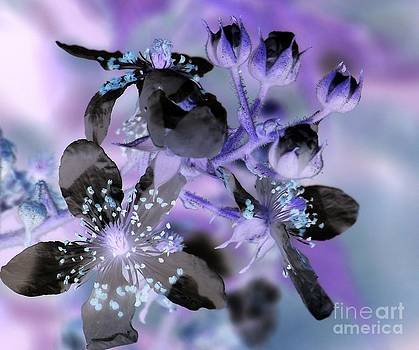 Purple Flower Abstract  2 by Eunice Miller