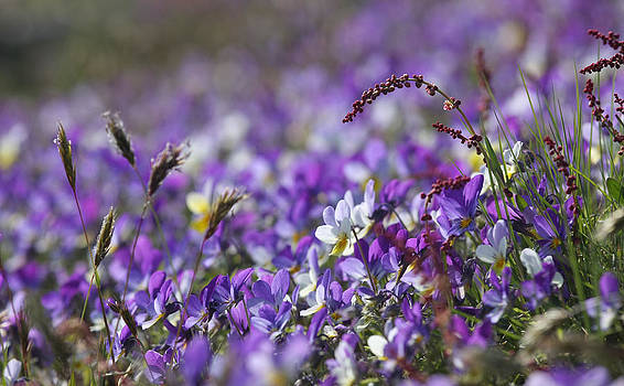 Dreamland Media - Purple Flower Bed