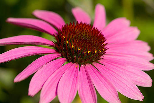 Devinder Sangha - Purple flower