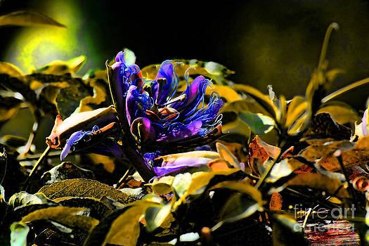 Purple Flower by Kristy Ollis