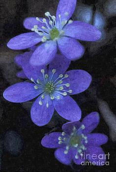 Purple flower by Larry Stolle