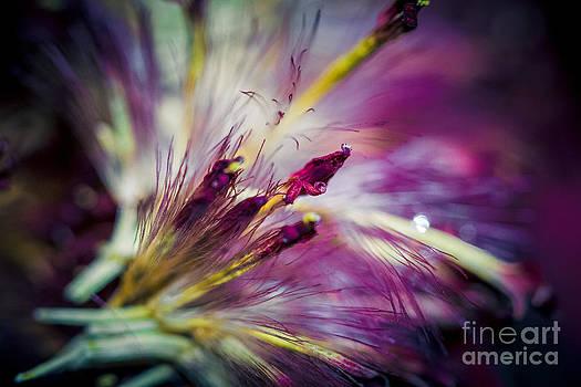 Purple Flower by Nel Saints