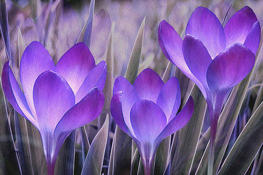 Purple Flowers 1 by Khiet Bui